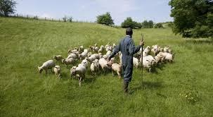 La Commission enterre la politique agricole commune