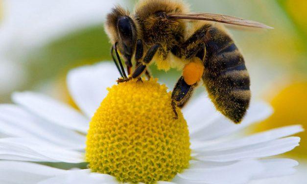«En finir avec l'hypocrisie sur la question des pesticides»