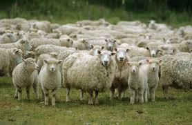 Le Pastoralisme : un enjeu de société