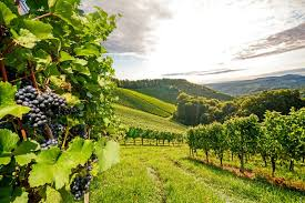 Quel Vin pour demain ?