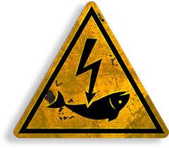 Fin de la pêche électrique : victoire !