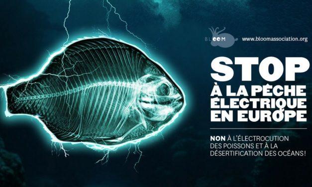 Pêche électrique : il faut débrancher les États !