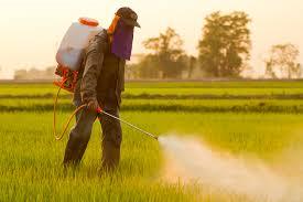 Chlorpyrifos : L'Europe dit NON à cet insecticide dangereux !
