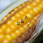 NON NON et NON aux OGM résistants au glyphosate !