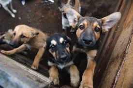 L'Europe veut la fin du commerce illégal des chats et des chiens